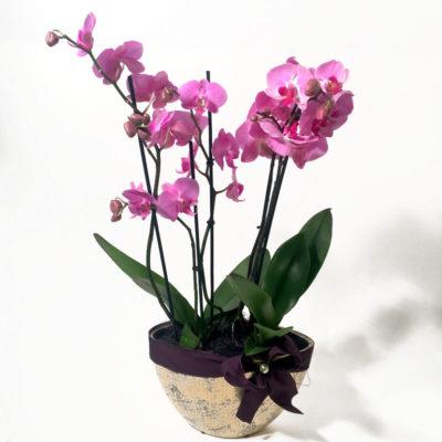 Seade orhideedega
